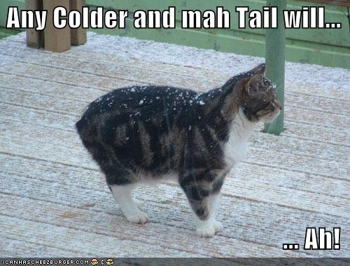 cold cat
